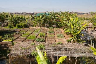 organic-vegetable-garden-inthar-heritage-house-inpawkhon-village-inle-D6T2DM